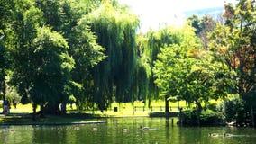 Sommerenten im Teich lizenzfreie stockfotografie