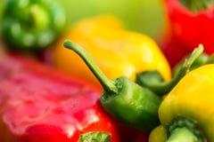 Sommerernte frisch auswählte, die Rot-, Grüner und Gelbergemüsepaprikas, legend in Gras im Garten Lizenzfreies Stockbild