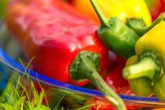 Sommerernte frisch auswählte, die Rot-, Grüner und Gelbergemüsepaprikas, legend in Gras im Garten Lizenzfreies Stockfoto