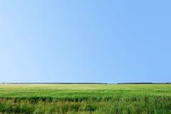 Sommerfeld des Grases Stockfotos