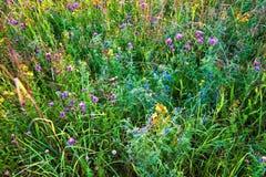 Sommerfeld mit Blumen Lizenzfreie Stockfotos