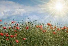 Sommerfeld mit Blumen und Sonne Lizenzfreie Stockfotografie