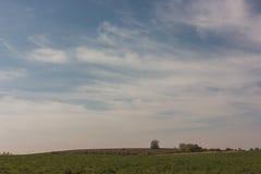 Sommerfeld am sonnigen Tag - gestalten Sie mit Wiese und Himmel landschaftlich Lizenzfreie Stockfotografie