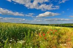 Sommerfelder Lizenzfreies Stockbild