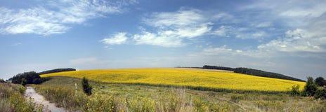 Sommerfelder auf Ukrainer Stockbilder
