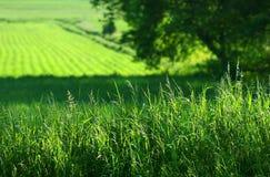 Sommerfelder des Grüns Stockfotografie