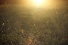 Sommerfeldhintergrund in der Sonnenuntergang- oder Sonnenaufgangzeit Stockbilder