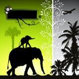 Sommerferien, Elefanten Stockfotografie