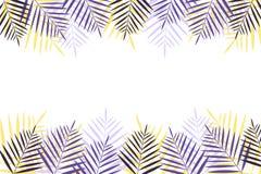 Sommerferienhintergrund mit Palmen Bunter naturalistischer Rahmen vom Palmblatt lizenzfreie abbildung