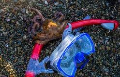 Sommerferienkonzeptmaske für das Tauchen und Rohr mit Krake auf einem Seestrand Stockbild