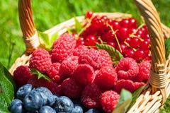 Sommerfrucht Lizenzfreies Stockfoto