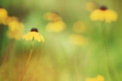 Sommergänseblümchen Lizenzfreie Stockfotografie