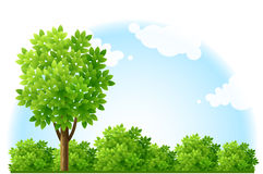 Sommergarten mit Baum und grünen Büschen lizenzfreie abbildung