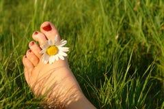 Sommergefühl Lizenzfreie Stockfotos