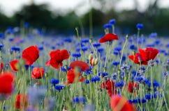 Sommergefühlsblumen Lizenzfreies Stockbild