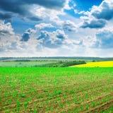 Sommergetreidefeld und -himmel Stockbilder