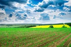 Sommergetreidefeld und -himmel Lizenzfreie Stockfotografie