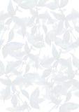 Sommergrün lässt dekorativen Hintergrund Stockbild
