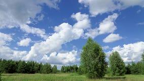 Sommergrünfeld unter dem blauen Himmel mit schönen Wolken auf dem Waldhintergrund Lizenzfreie Stockfotografie