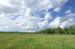 Sommergrünfeld unter dem blauen Himmel mit schönen Wolken auf dem Waldhintergrund Stockfoto