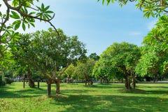 Sommerhimmel und -bäume lizenzfreie stockfotografie