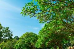 Sommerhimmel und -bäume lizenzfreies stockbild