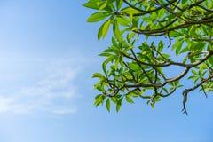 Sommerhimmel und -bäume lizenzfreie stockbilder