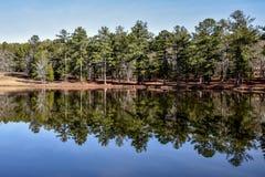 Sommerhimmel und -bäume reflektierten sich im Seewasser Stockfotografie