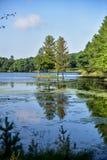Sommerhimmel und -bäume reflektierten sich im Seewasser Lizenzfreie Stockfotografie
