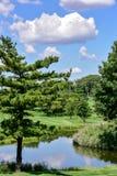 Sommerhimmel und -bäume reflektierten sich im Seewasser Lizenzfreies Stockbild