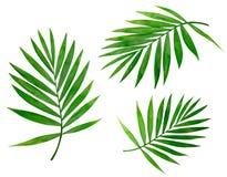Sommerhintergrund mit den tropischen Palmen getrennt Stockfotos