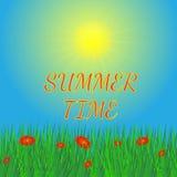 Sommerhintergrund mit Sonne und Gras Stockfoto