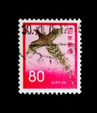 Sommering Pheasant Syrmaticus Soemmeringii bird, Fauna, Flora and Cultural Heritage serie, circa 1971. MOSCOW, RUSSIA - NOVEMBER 23, 2017: A stamp printed in Stock Image