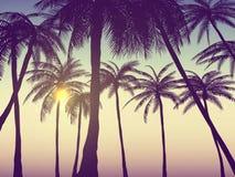 Sommerkalifornien-tumblr Hintergründe stellten mit Palmen, Himmel und Sonnenuntergang ein Sommerplakatplakatflieger-Einladungskar Stockfotografie