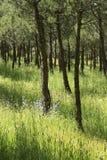 SommerKiefernholz Ökologischer Rest entspannen sich Stockbild
