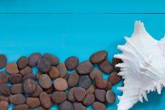 Sommerkonzept: Muscheln und Kiesel auf hölzernem Hintergrund Lizenzfreie Stockbilder