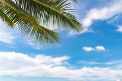 Sommerkonzept, Palmblatt auf blauem Himmel und weiße Wolken, perspect stockbild