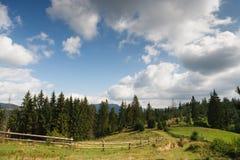 Sommerland-Landschaftshintergrund Eine Bahn zum Wald Stockfoto