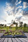 Sommerlandschaft über Wiese der purpurroten Heide während des Sonnenuntergangbetrugs Lizenzfreie Stockbilder