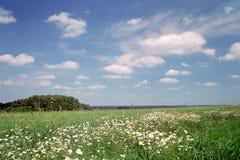 Sommerlandschaft lizenzfreies stockfoto