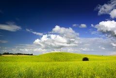 Sommerlandschaft. Lizenzfreies Stockbild