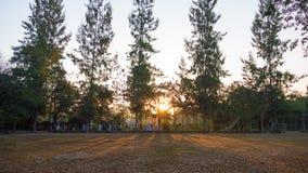 Sommerlandschaft bei Sonnenaufgang Kiefer, die auf einem Gebiet und einem s wachsen Lizenzfreie Stockbilder