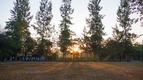 Sommerlandschaft bei Sonnenaufgang Kiefer, die auf einem Gebiet und einem s wachsen Lizenzfreie Stockfotografie