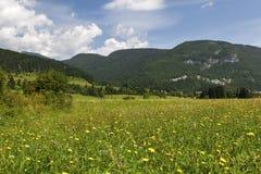 Sommerlandschaft in den Bergen und im dunkelblauen Himmel mit Wolken Stockfotografie