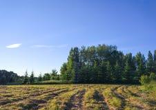 Sommerlandschaft in der Landschaft Lizenzfreie Stockbilder