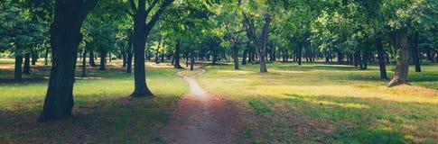 Sommerlandschaft, die Gehweg durch den Wald am sonnigen Tag zeigt Lizenzfreie Stockfotografie