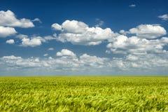 Sommerlandschaft. grünes Feld und Wolken Lizenzfreie Stockfotos