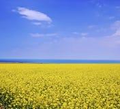 Sommerlandschaft. Himmel und der See und das Rapsfeld Stockfotografie