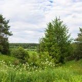 Sommerlandschaft im Floodplain des Flusses Vetluga Lizenzfreie Stockbilder