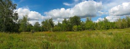 Sommerlandschaft im Park. Panorama Lizenzfreies Stockbild